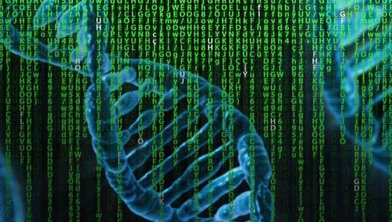 la-capacita-di-risposta-alle-infezioni-dipende-dalla-genetica