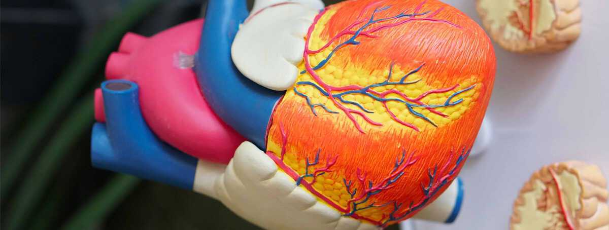 scoperto-nel-sangue-un-nuovo-biomarcatore-capace-di-predire-l-infarto